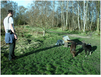 Ellie, Lister and Tilly, bounding around. Loxley Common, Sheffield..png