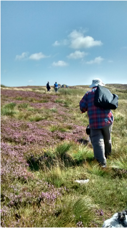 Setting off, the heather all amongst the blooming heather, up on Caldbeck Common.png